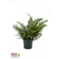 Yayılıcı Ardıç - Sabin Ardıç - Juniperus Sabina